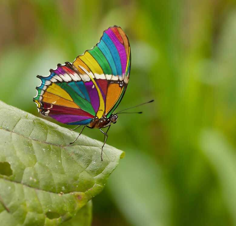 http://www.coloursindia.com/wp-content/uploads/2016/09/1.jpg
